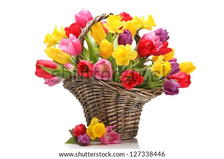 Tulips and daffodils in basket,isolated on white background. - stock photo