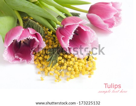 Tulips and mimosa flowers bunch isolated on white background with sample text - stock photo