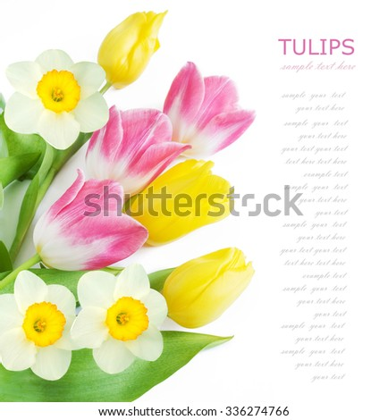 Tulips and narcissus flowers bunch isolated on white with sample text - stock photo