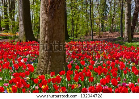 Tulips and narcissus in the park. Spring landscape. - stock photo