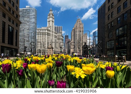 Tulips bloom along Michigan Avenue in downtown Chicago. Chicago, Il. 25 April, 2016 - stock photo