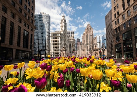 Tulips bloom along Michigan Avenue in downtown Chicago. Chicago, Il. 6 May, 2016 - stock photo