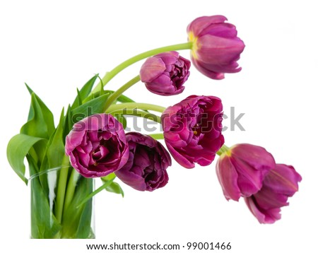 Tulips bouquet closeup details in glass vase isolated on white background - stock photo