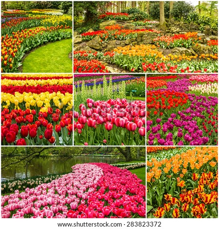 Tulips collage, Keukenhof flower park, Holland, Netherlands - stock photo