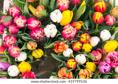Tulips for sale at a flower market - stock photo