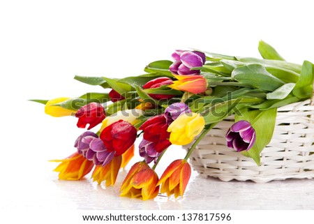 tulips in basket isolated on white background. colors