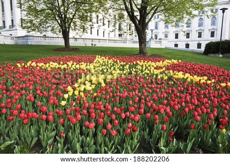 Tulips in front of State Capitol of Wisconsin - stock photo