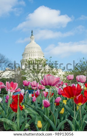 Tulips in front of the Capitol building in spring, Washington DC - stock photo