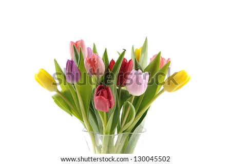 Tulips in mixed colors on a white background