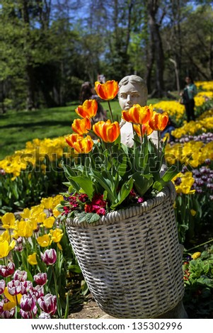 tulips in spring - stock photo