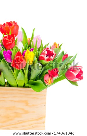 Tulips in the box on white background