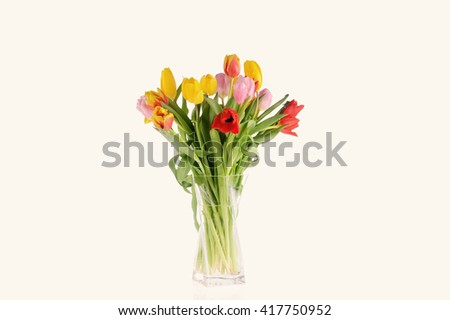 Tulips in the studio isolated over white background