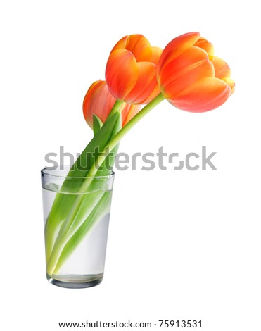 Tulips in the vase isolated on white background - stock photo