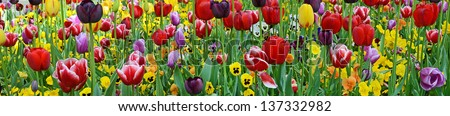 Tulips & violets - stock photo