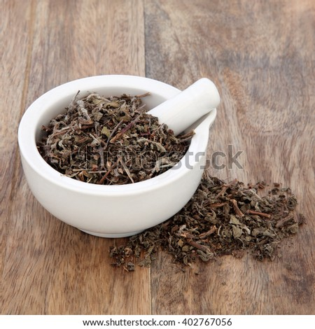 Tulsi holy basil herb used in natural alternative herbal medicine in a mortar with pestle over old wooden background. - stock photo