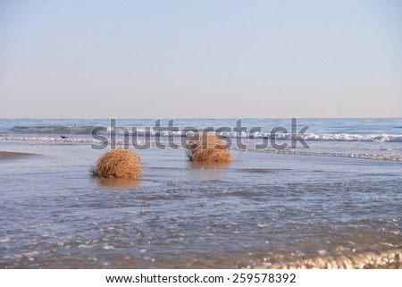 Tumble weeds in the surf during low tide.   - stock photo