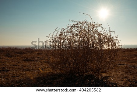 Tumbleweed - stock photo