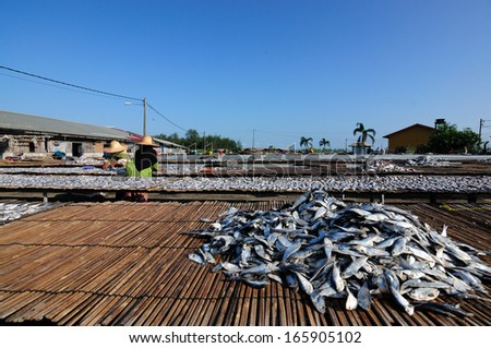 TUMPAT,KELANTAN, MALAYSIA - CIRCA 2012 : Workers dry salted fish under the sun during the daylight. This Processed normally took 2-3 days to completely dry the fish.