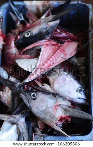 Tuna fish heads on the fish market, Close up shot  - stock photo