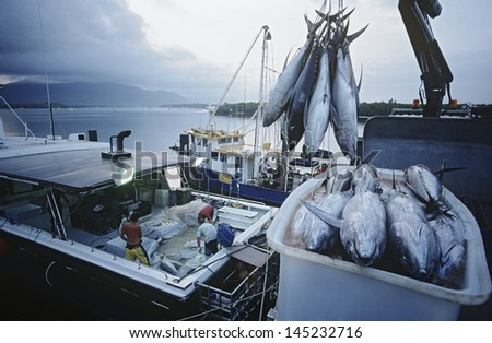 Tuna fish in container on fishing boat dawn Cairns Australia - stock photo