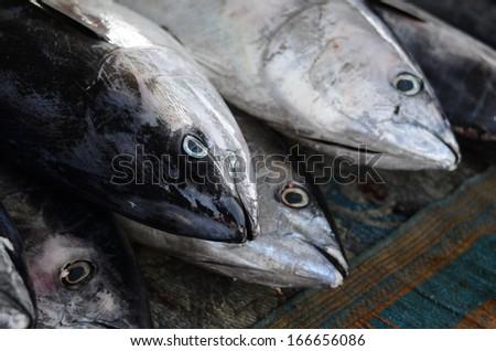 Tuna fish on the fish market, Close up shot  - stock photo