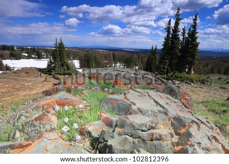 Tundra landscape in the Snowy Range Mountains of Wyoming - stock photo