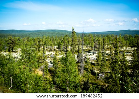 Tundra of northern latitudes in summer - stock photo