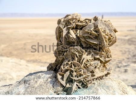 tunez rose desert, salt lakes tunez with desert background. - stock photo