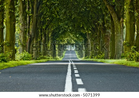 Tunnel made from trees growing above the road - stock photo