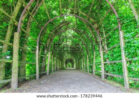 tunnel of green tree