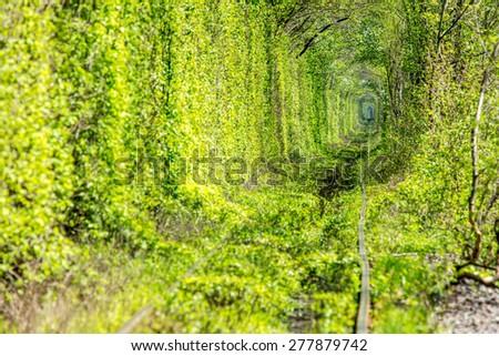 Tunnel of love. Klevan Ukraine. - stock photo
