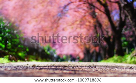 Tunnel of pink flower tree, Blurred background