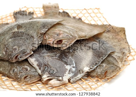 Turbot fish on white background