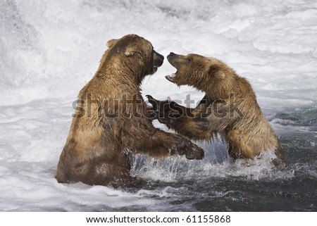 Turf Battle - Two male grizzly bears over a salmon fishing spot. Brooks river, Katmai National Park, Alaska. - stock photo