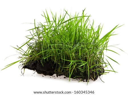 turf on a white background - stock photo
