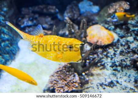 TURKEY, ISTANBUL - JAN 11/2016: Istanbul Aquarium received visitors after restoration.
