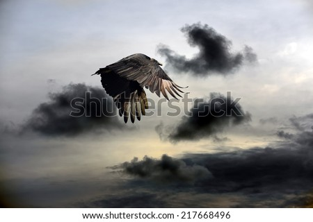 Turkey Vulture flying against a stormy sky - stock photo