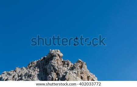 Turkey vultures soar over cliffs in the Mexican Baja peninsula. - stock photo