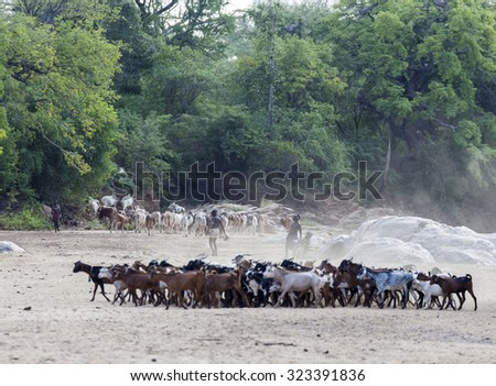 TURMI, OMO VALLEY, ETHIOPIA - DECEMBER 30, 2013: Unidentified Hamar shepherds with their herd in a dry river bed.  - stock photo