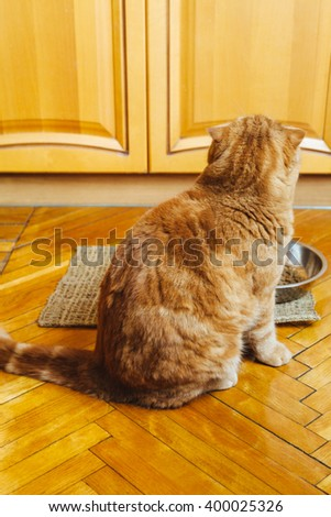 Turned away red cat sitting near a bowl in the kitchen - stock photo