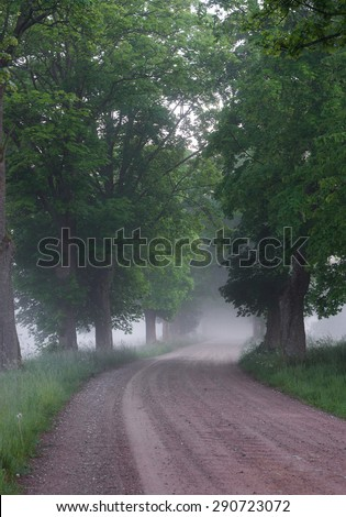 Turning country road running through tree alley