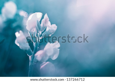 Turquoise flower- abstract background