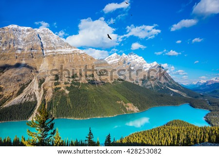 """Turquoise Lake Peyto in Banff National Park. Mountain Lake as a """"wolf head"""" is popular among tourists - stock photo"""