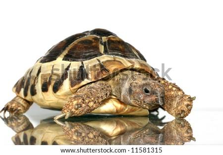 turtle 2 - stock photo