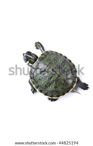Turtle and carapace - stock photo