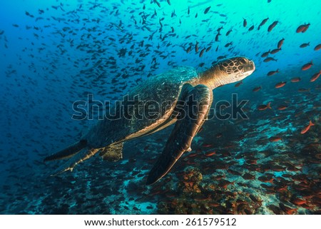 Turtle and tons of Fish - stock photo