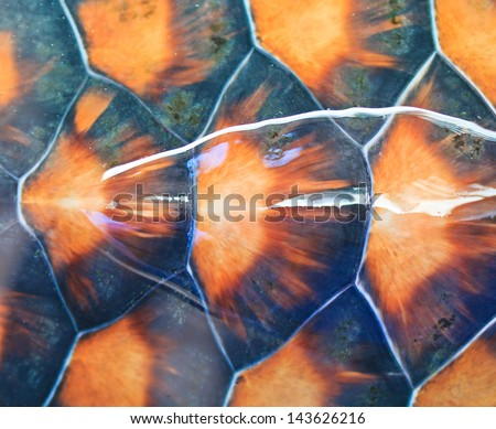 Turtle carapace Background - stock photo