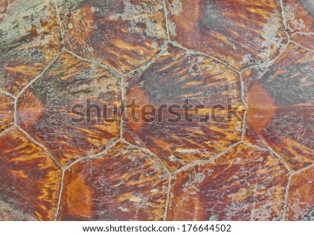 Turtle carapace Background (hawksbill sea turtle) - stock photo