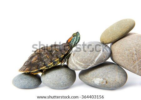 Turtle climbing up the steps. Concept isolated on white background - stock photo