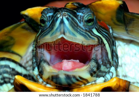 Turtle close up - stock photo